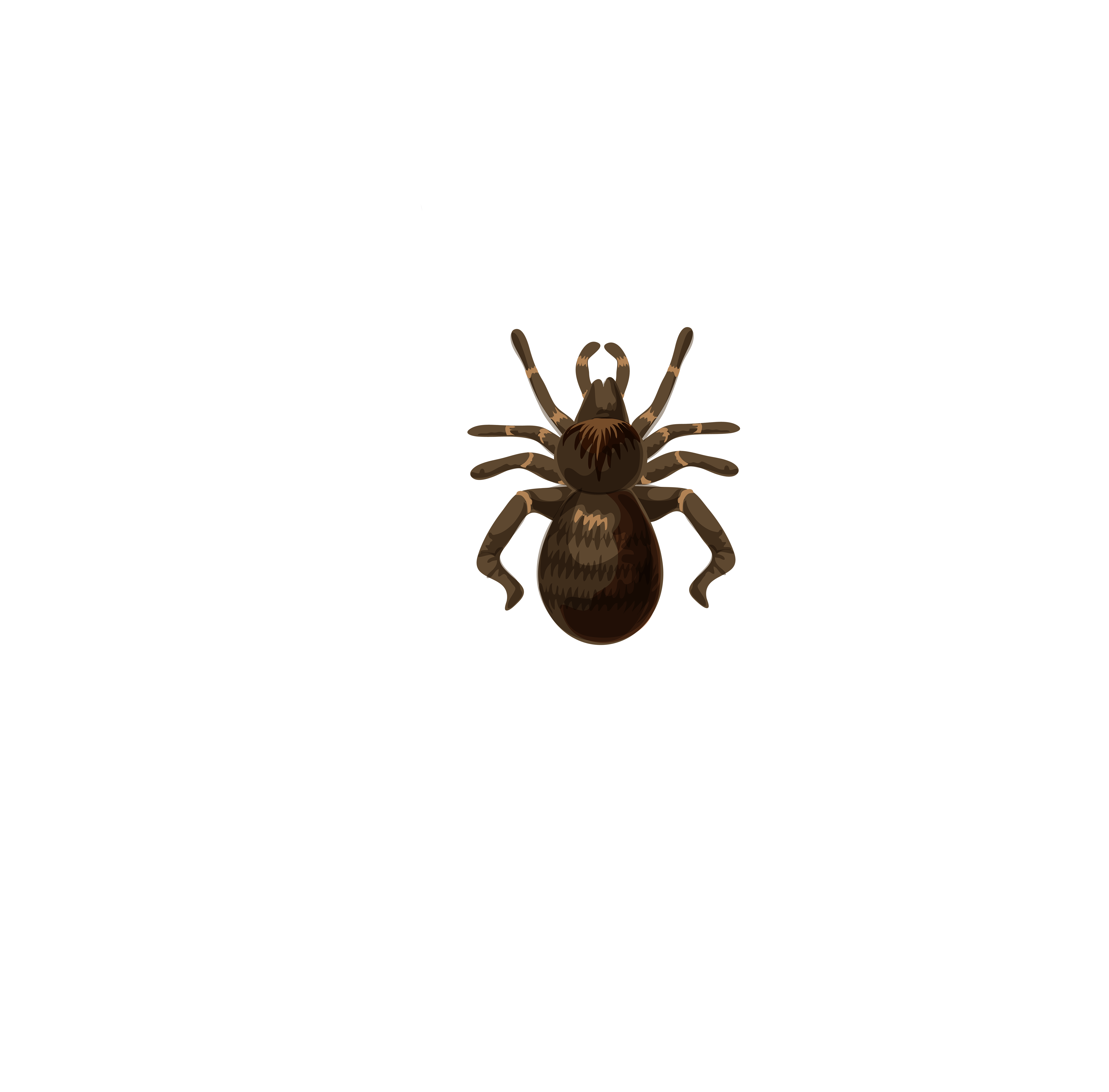 Bee wing brown pattern. Insect clipart spider