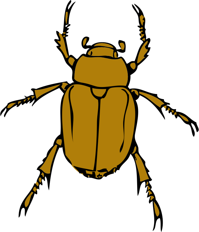 Insects water beetle