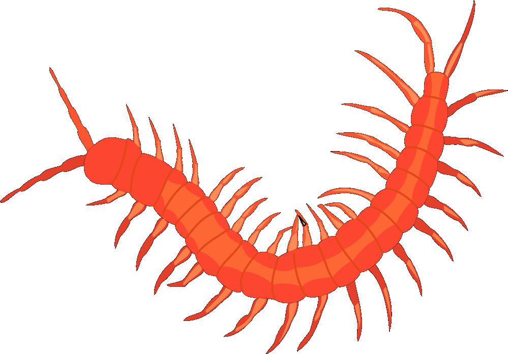 Clipartist net clip art. Lobster clipart svg