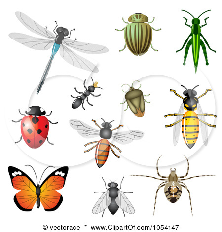 Insects clipart. Free