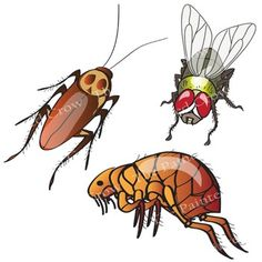 Insect clip art bug. Insects clipart