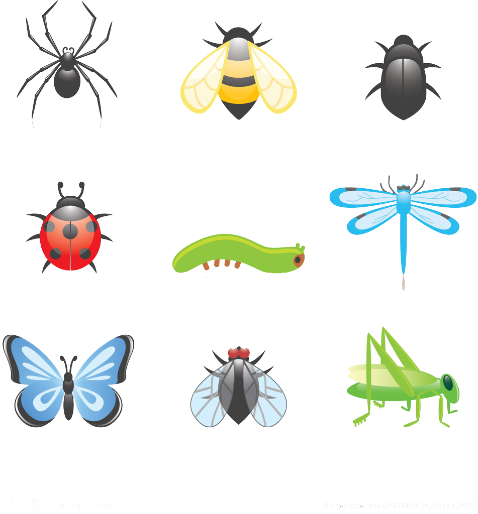 Insects clipart beetle insect, Insects beetle insect ...