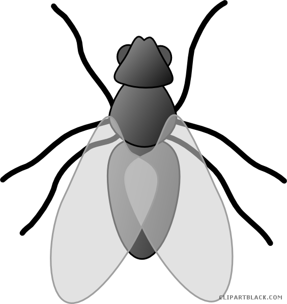 Insects clipart black and white. Insect bug animal free