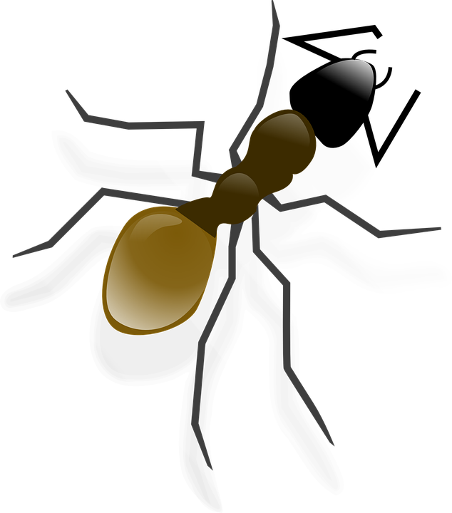 Insects clipart brown ant. Infestation in brooklyn pest