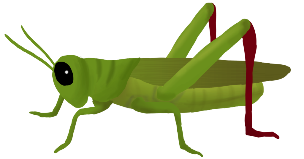 Insects clipart cricket. Grasshopper png peoplepng com
