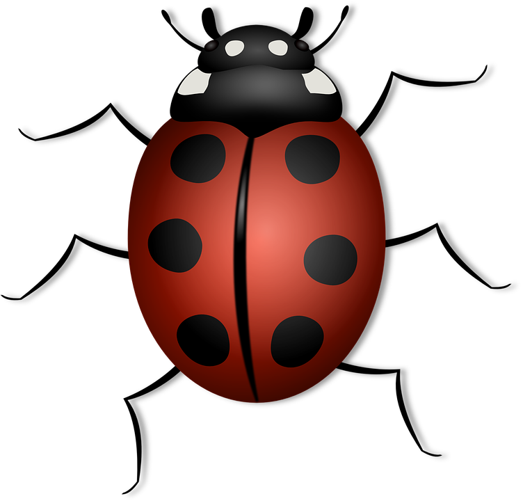 Ladybug clipart symmetrical. Insect summer free on