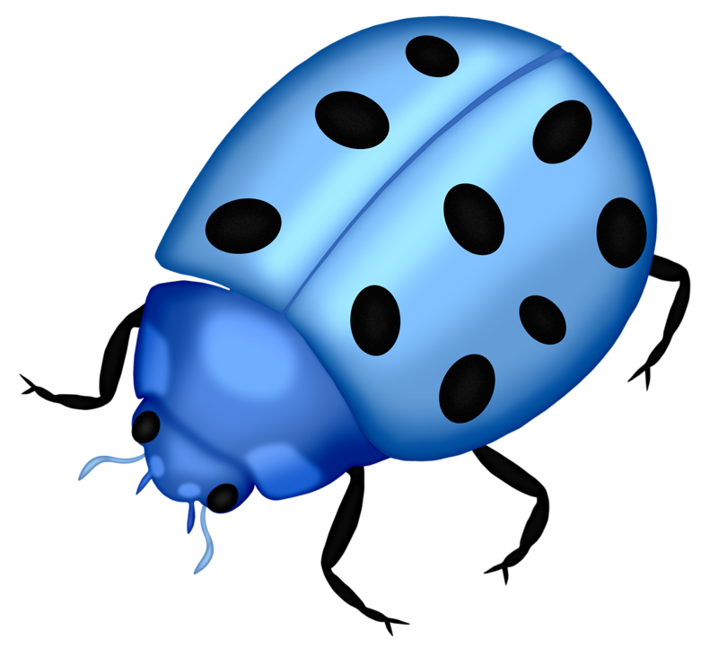 Bug png clip art. Insects clipart garden insect