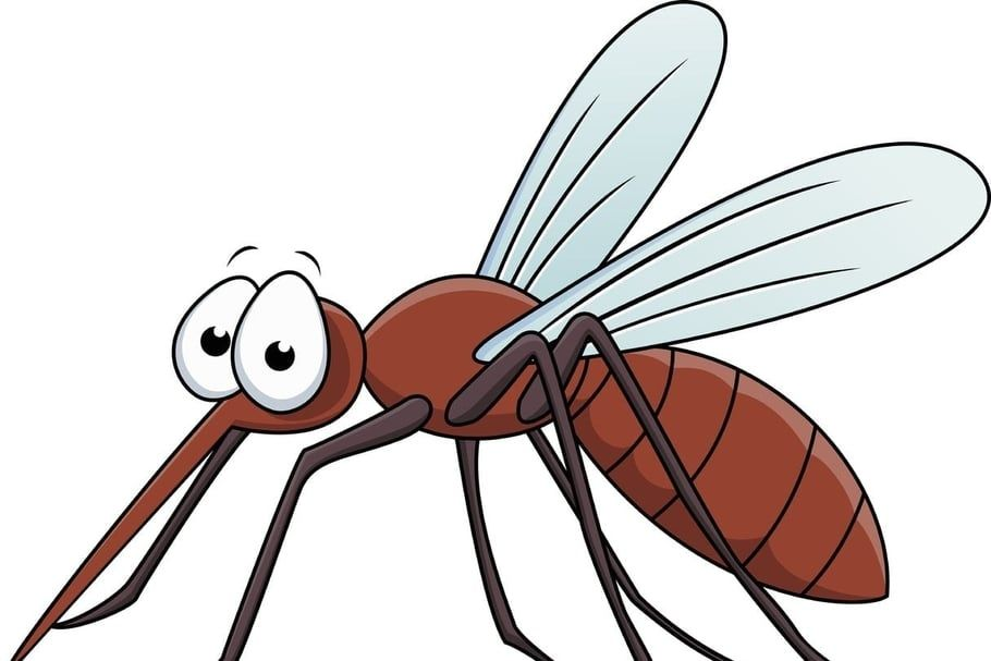 insects clipart mosquito