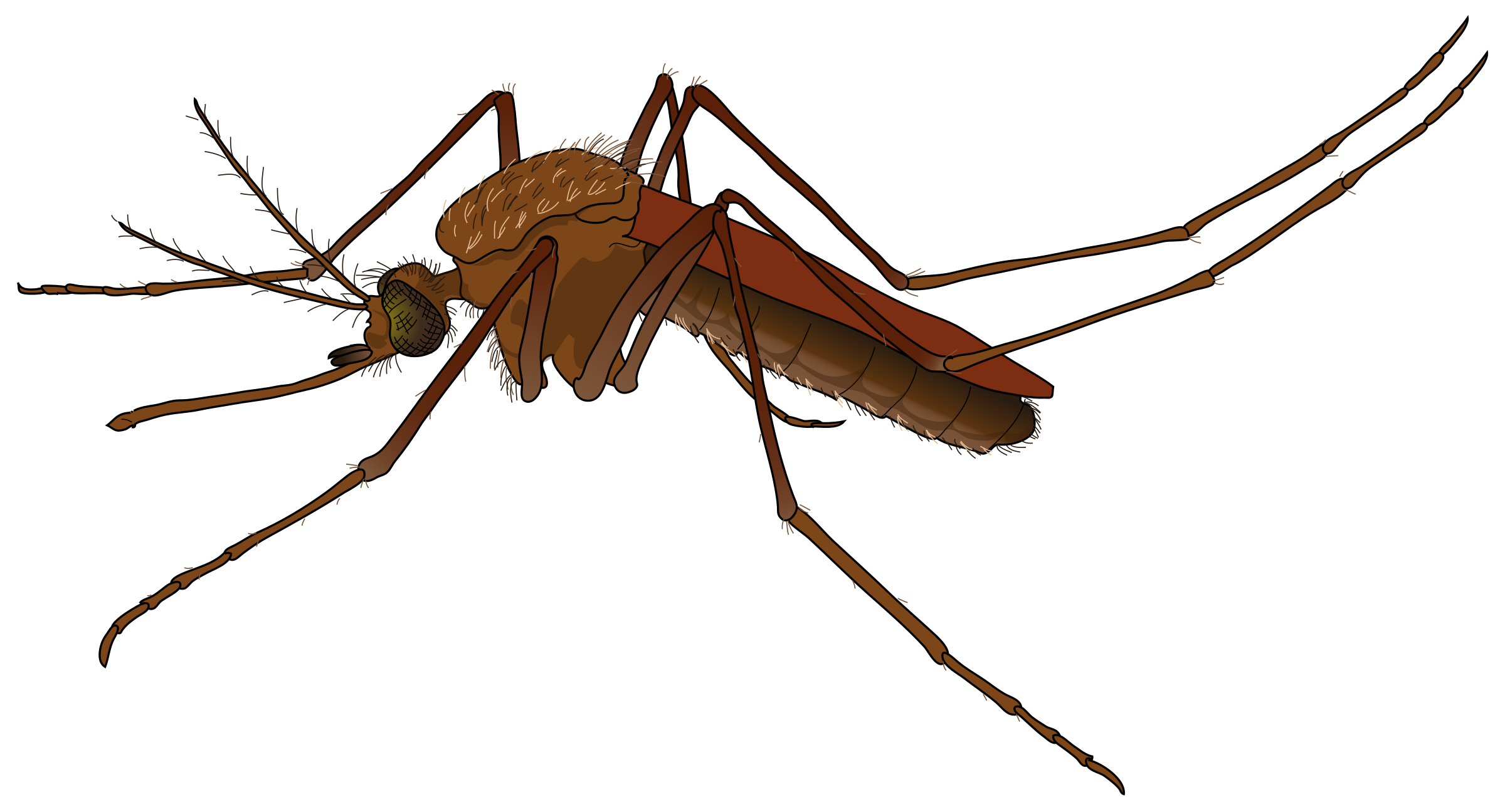 Insects clipart mosquito. Big image png