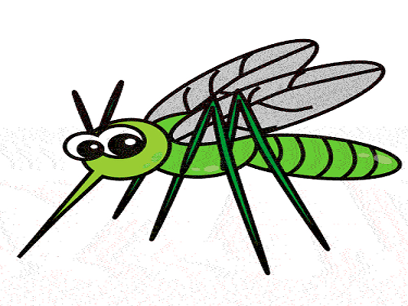 Free download best . Insects clipart mosquito