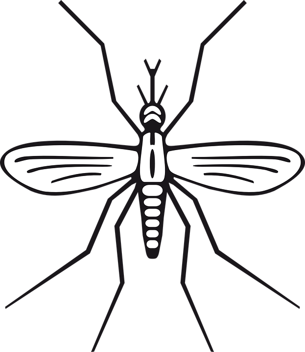 Free image on pixabay. Insects clipart simple bug