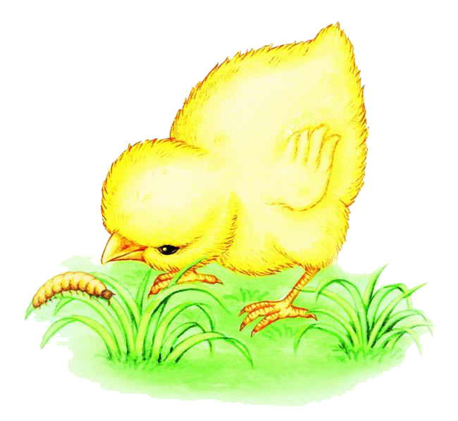 Insects clipart worm. Chicken bird eating illustration