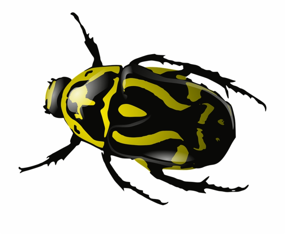 Insects clipart yellow bug. Insect beetle wasp black