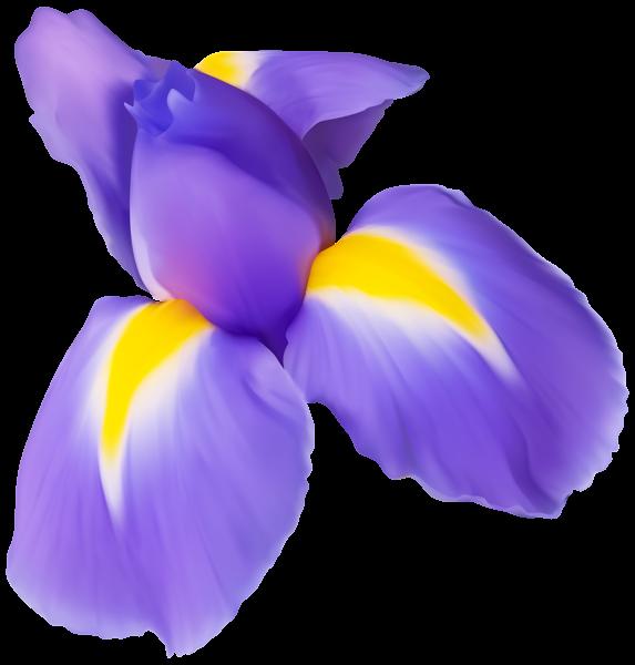 Purple clip art image. Iris flower png