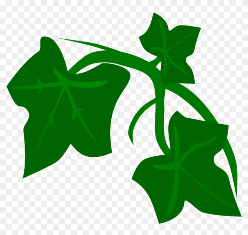 Leaf cartoon hd png. Vines clipart poison ivy