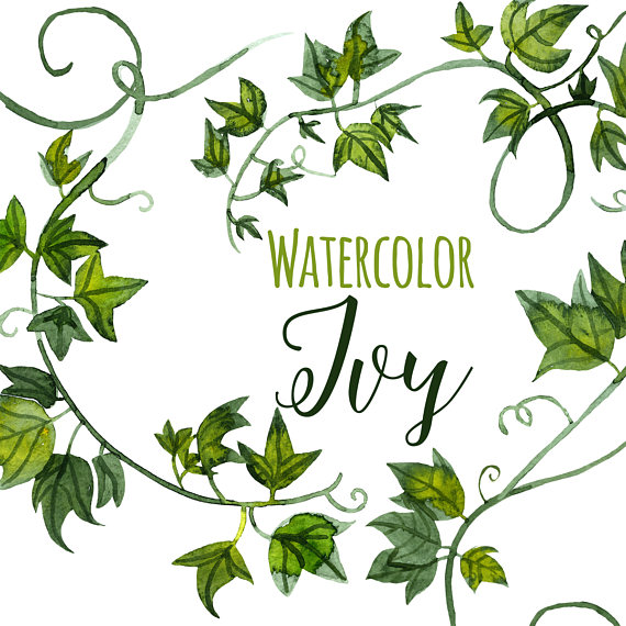 Ivy clipart. Watercolor green tendrils illustration