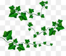 Ivy clipart. Vine leaf clip art