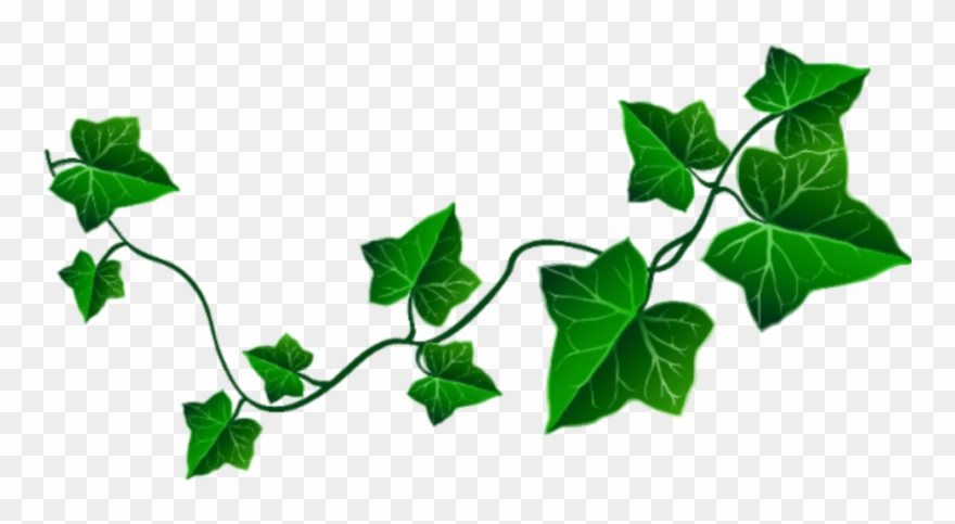 Png download pinclipart . Ivy clipart