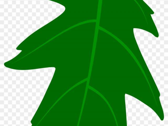 Free download clip art. Ivy clipart big leaf