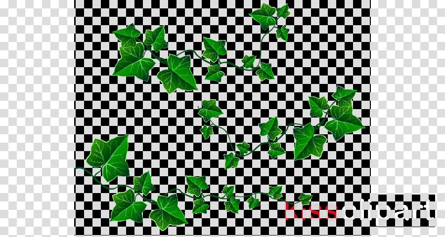 Family tree illustration vine. Ivy clipart design