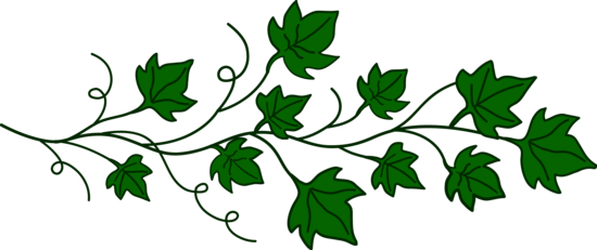 Vine of ivy leaves. Vines clipart poison oak