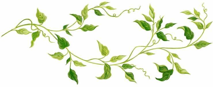 Vine green clip art. Ivy clipart horizontal