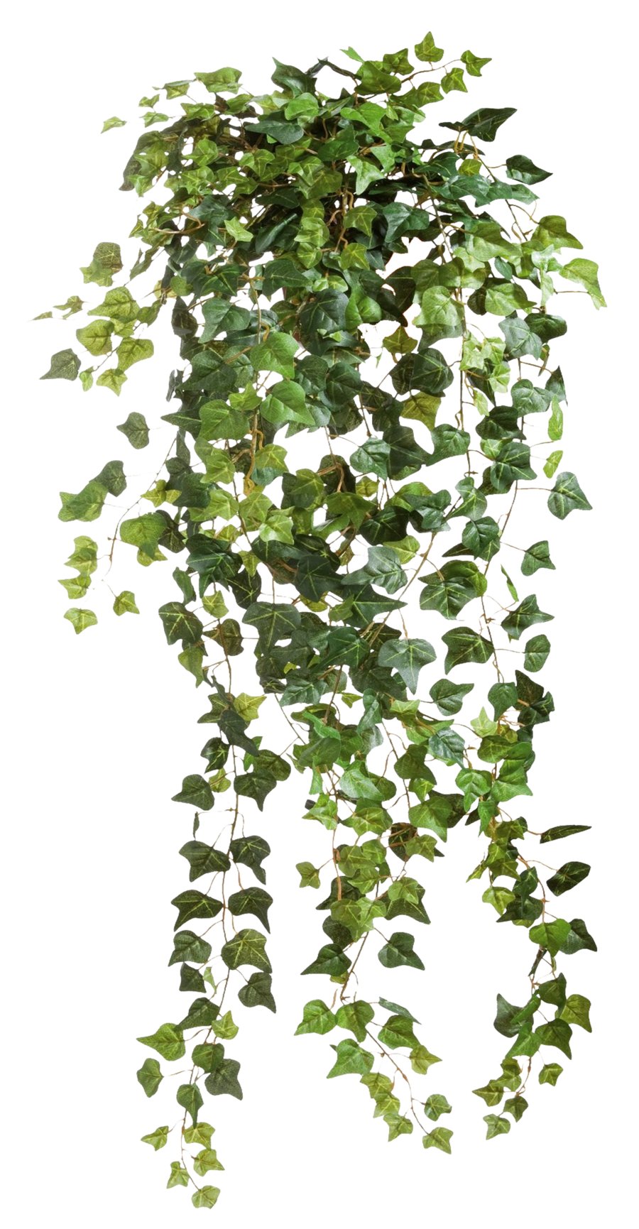 Transparent png pictures free. Vines clipart creeper plant