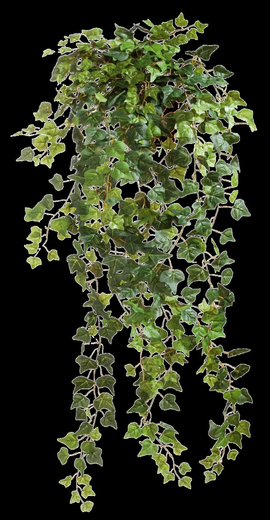 Tree clipart vine. Vines transparent png pictures