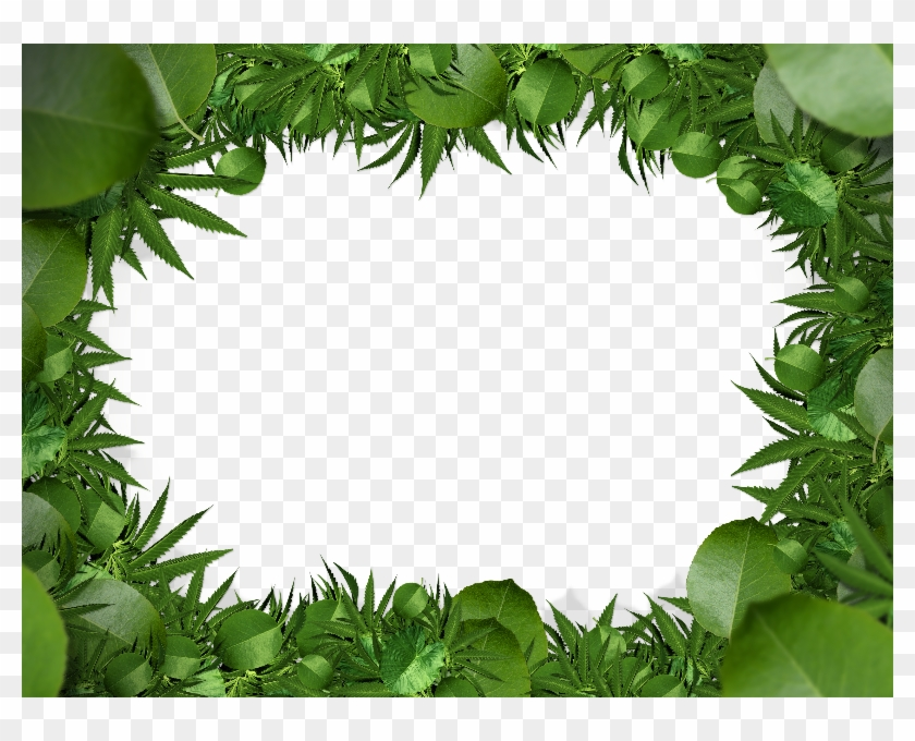 Green leaf border png. Jungle clipart nature frame