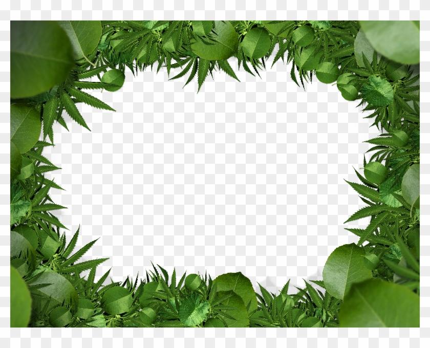 jungle clipart nature frame jungle nature frame transparent free for download on webstockreview 2020 jungle clipart nature frame jungle