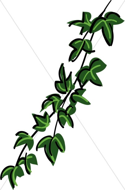 Vines clipart animated. Contemporary ivy vine nature