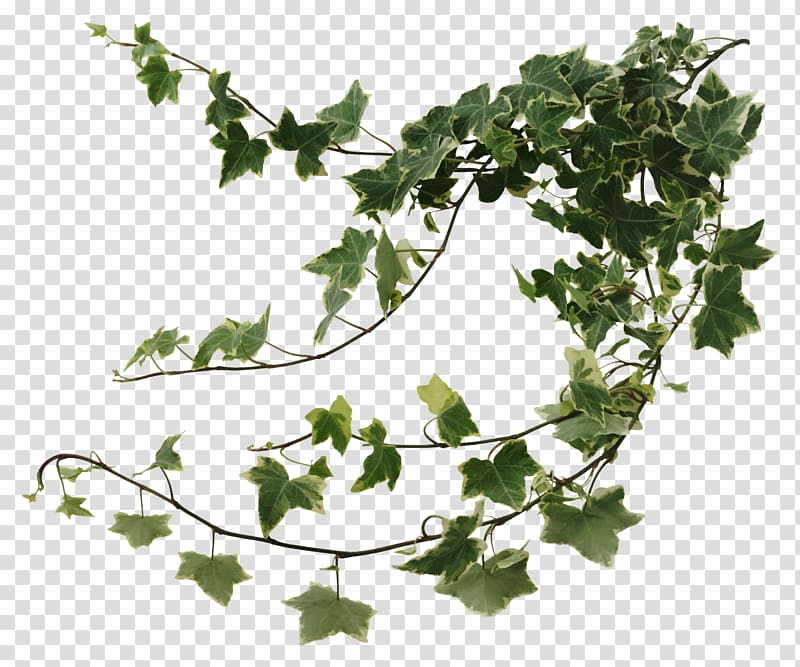 Vines clipart leafy vine. Green with white outline