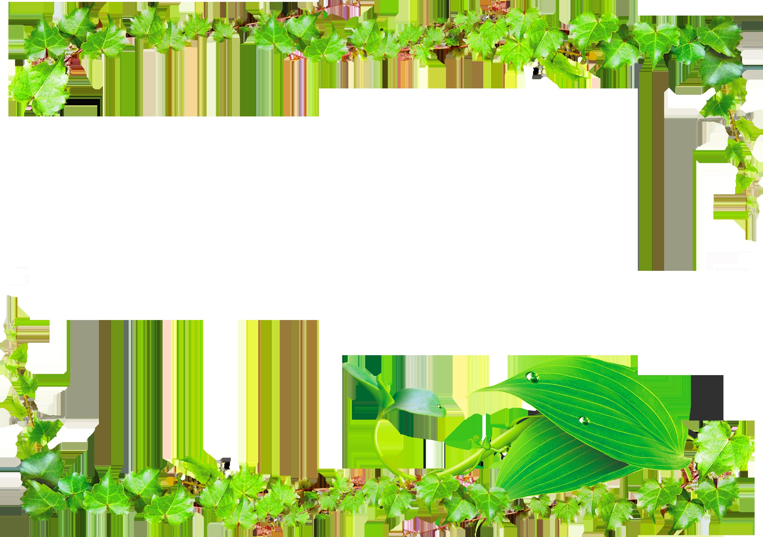 Leaf green border transprent. Vines clipart watermelon vine