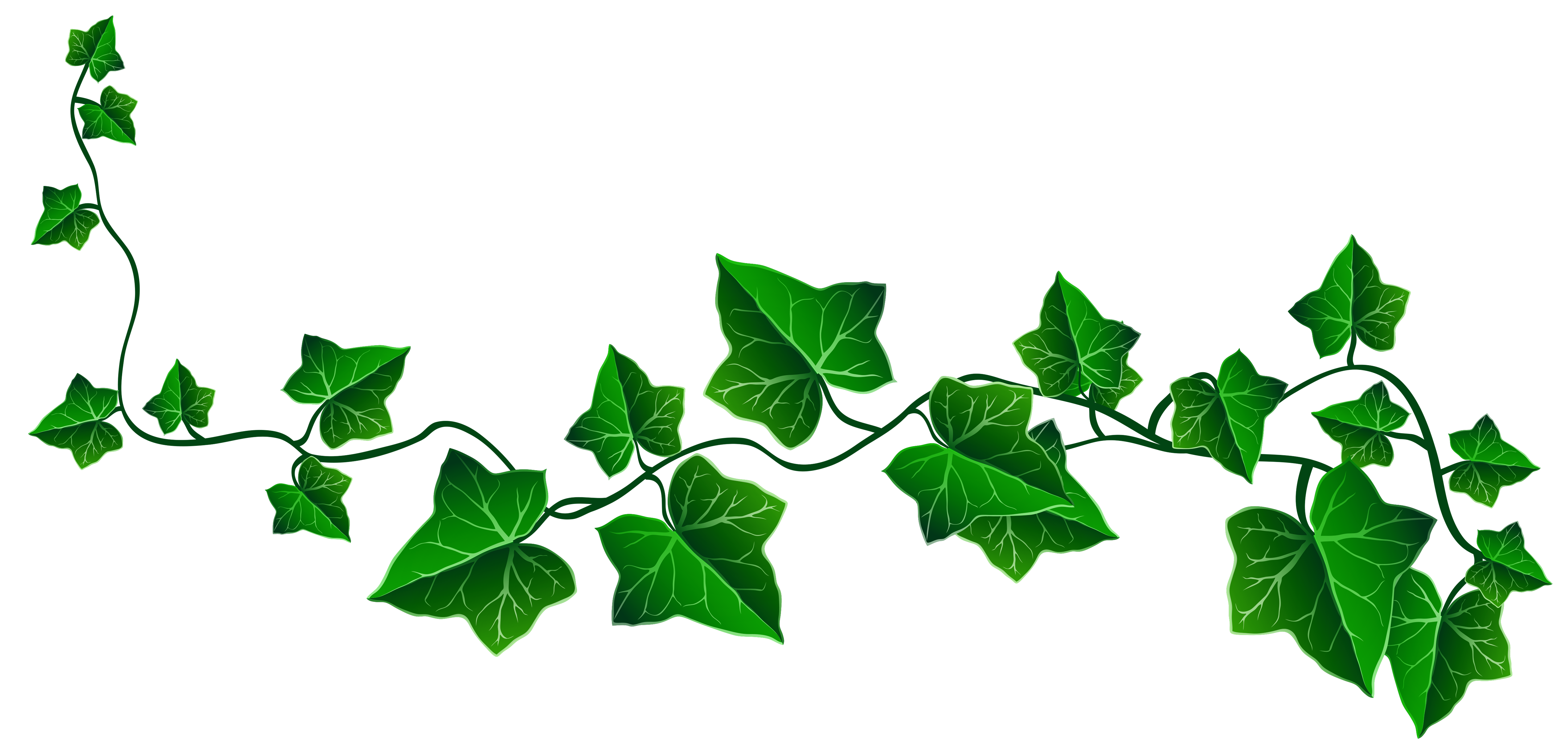 Vines clipart. Free ivy cliparts download