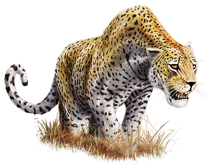 Leopard images all download. Png files with transparent background