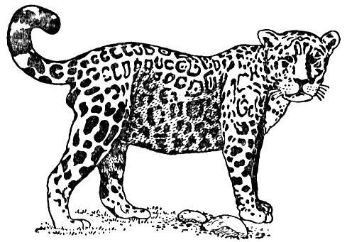 Free coloring pages . Jaguar clipart color