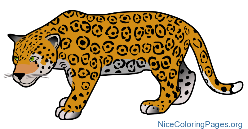 Png nice coloring pages. Jaguar clipart colouring