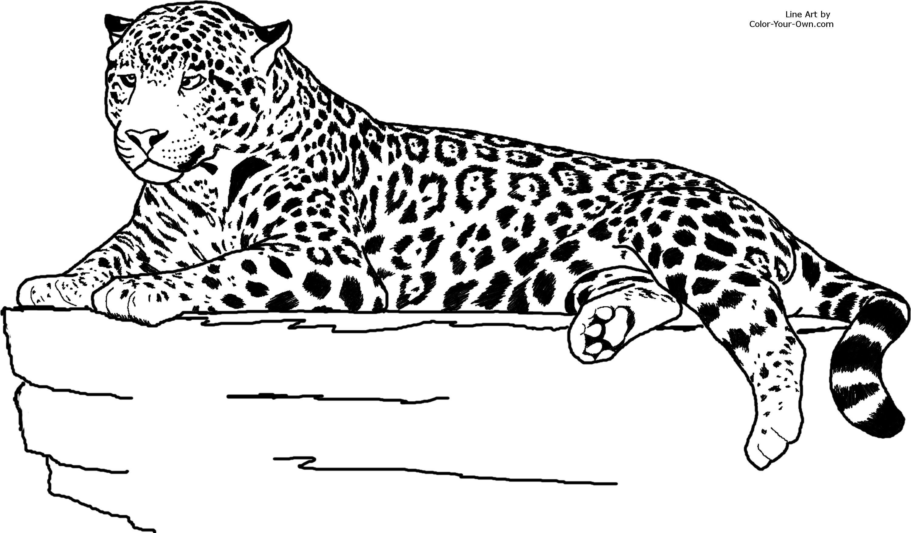 Realistic animal coloring pages. Jaguar clipart colouring