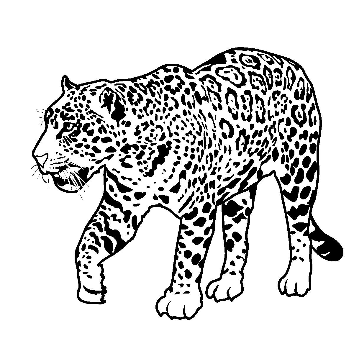 Free animal line art. Jaguar clipart lineart