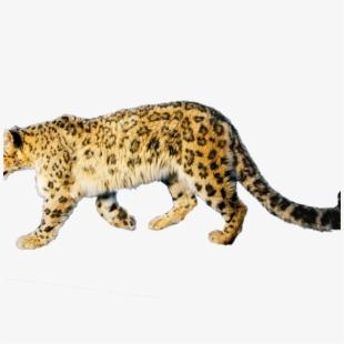 Cheetah clip art . Jaguar clipart mammal animal