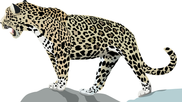 Jaguar clipart mammal animal. Free page of public