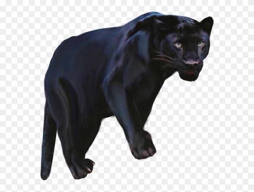 Pantera animal png black. Jaguar clipart panther