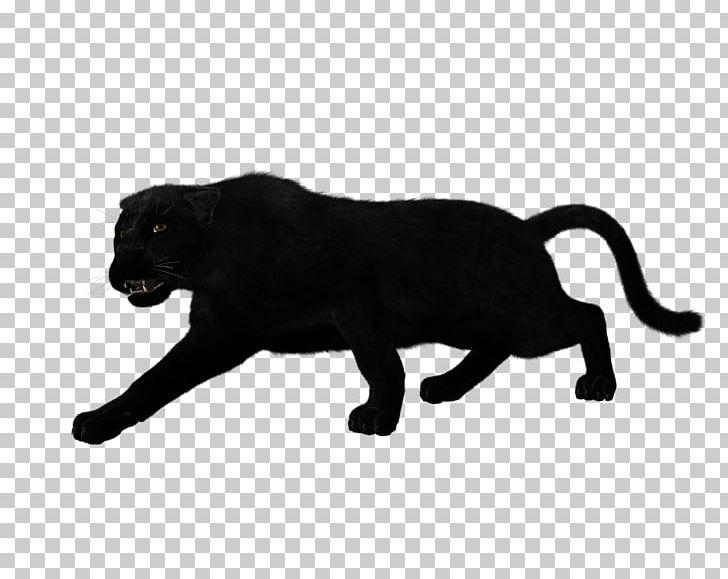 Jaguar clipart panther. Black silhouette leopard png