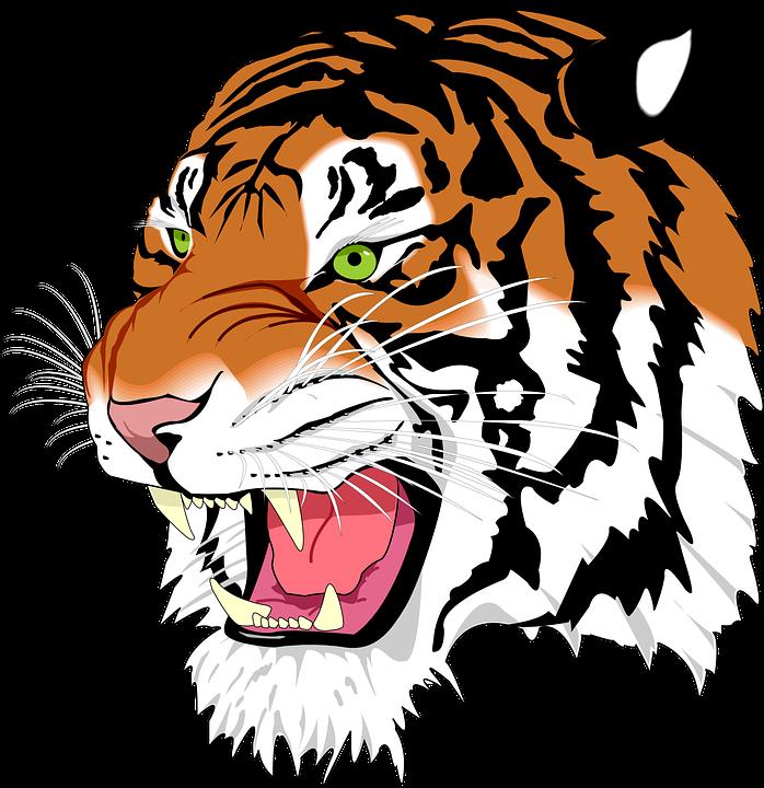 Jaguar roaring