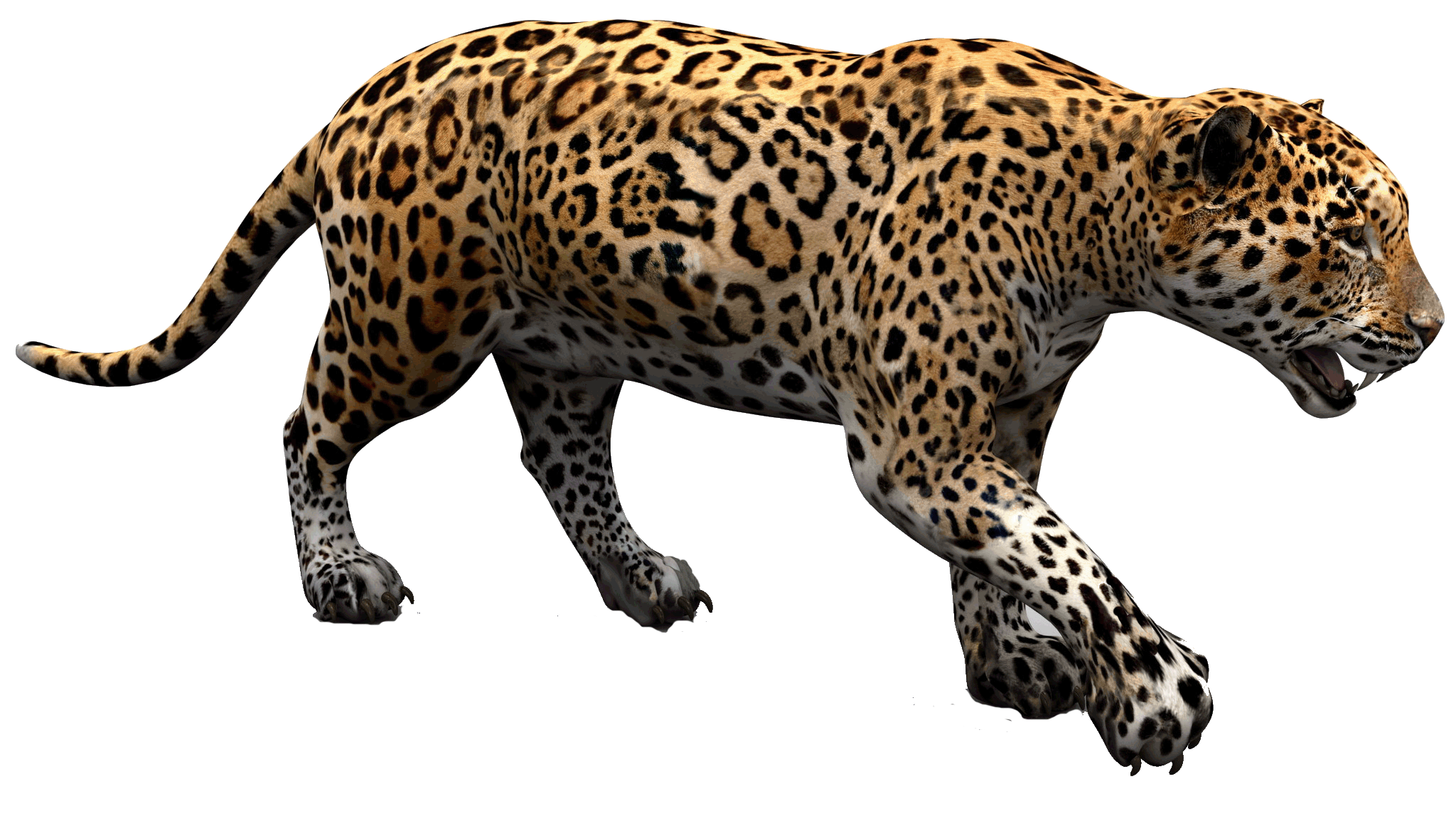 Png images free download. Jaguar clipart tropical animal