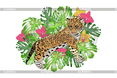Jaguar clipart tropical animal. Stock photos and vektor