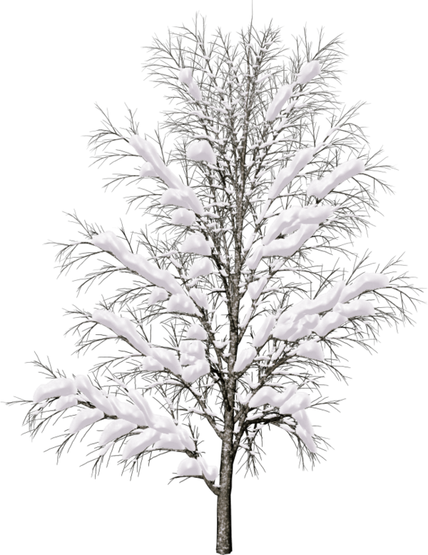 png images free. Landscape clipart pine tree