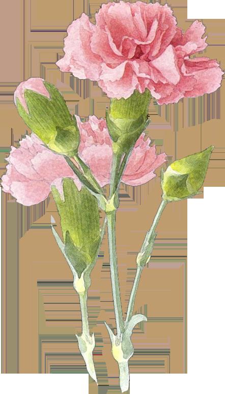 Laminas y trabajos con. January clipart watercolor