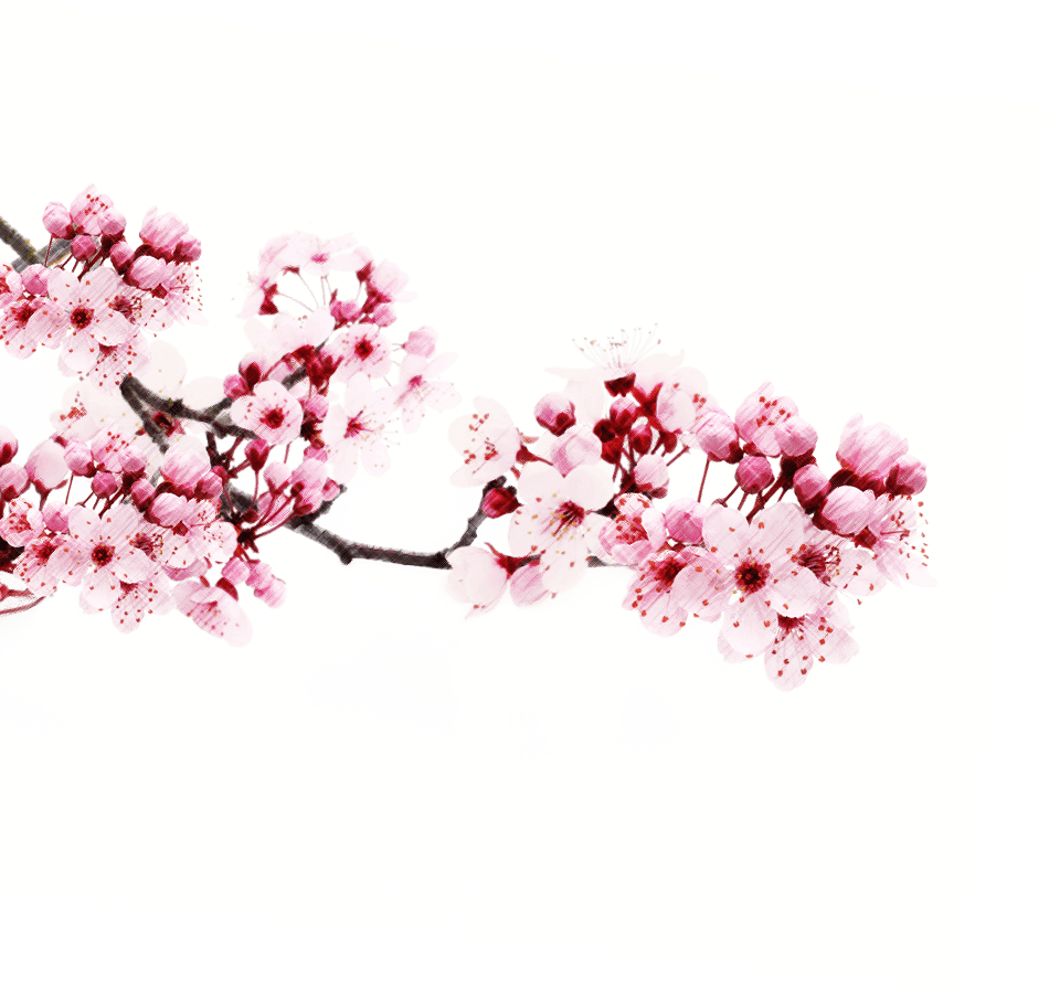 Images free download. Sakura flower png