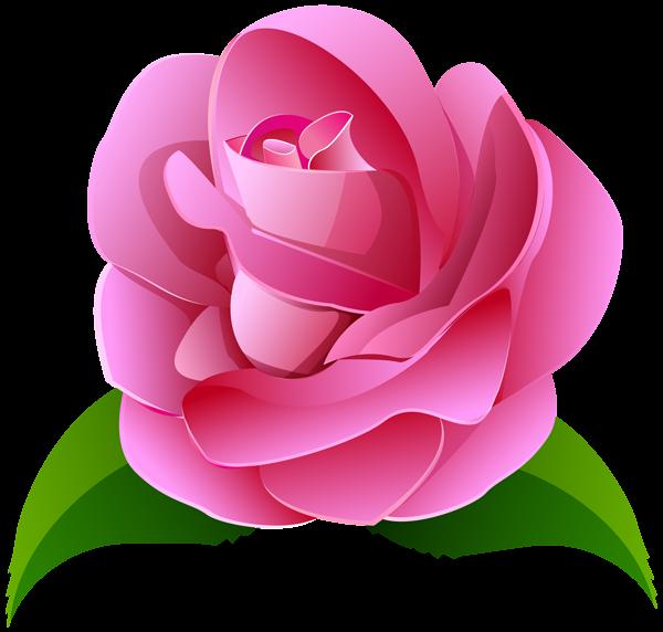 Pink rose deco transparent. Japanese flower png